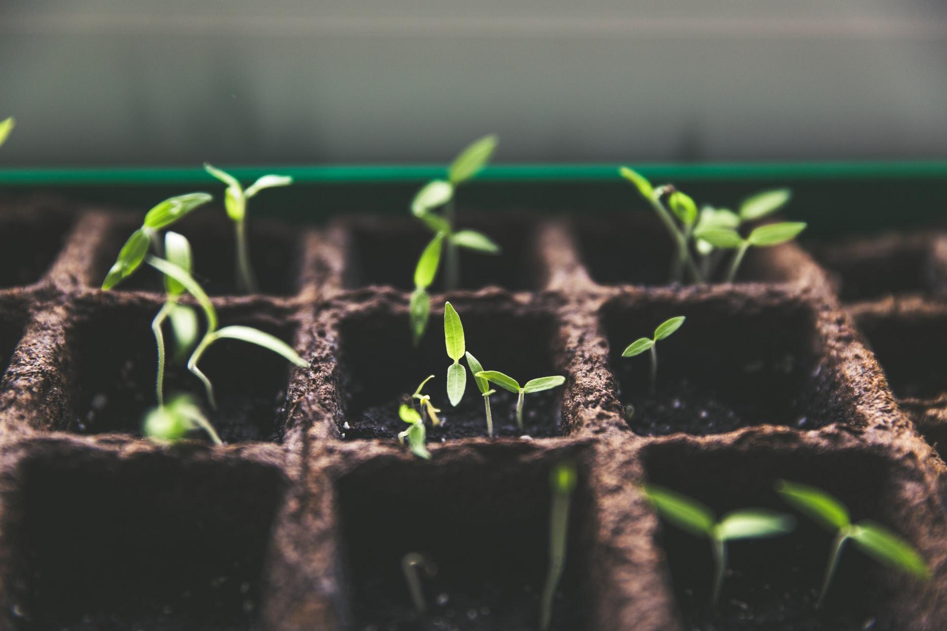 Investavimas - pirmieji žingsniai